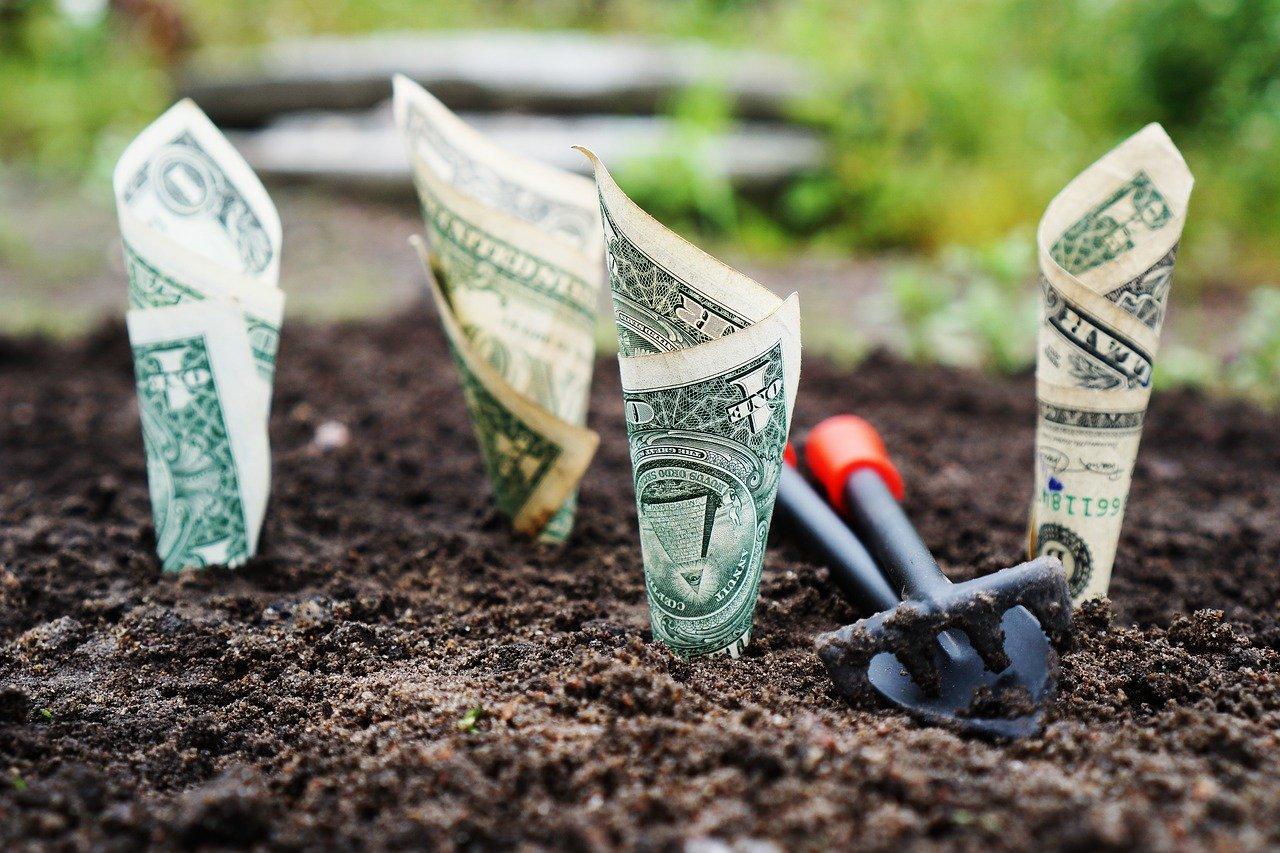 Money growing in community soil